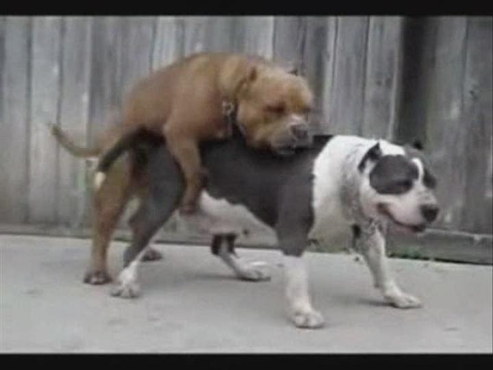 Посмотреть ролик - Собачий мега-трах! ))) как трах собачки.