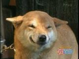 Vigyorgó kutya