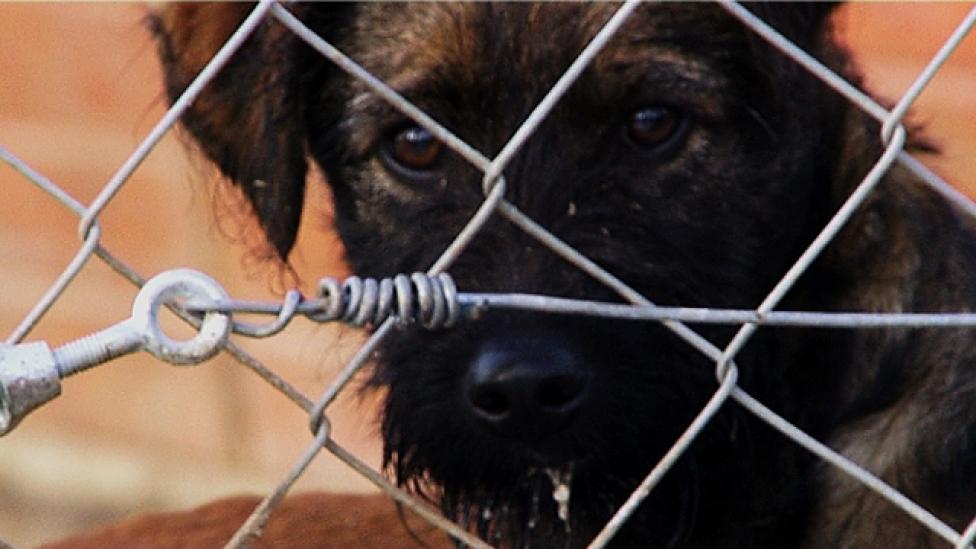 Megmenti vagy megalázza a kutyákat a csip?