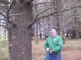 Dagi srác és a famás