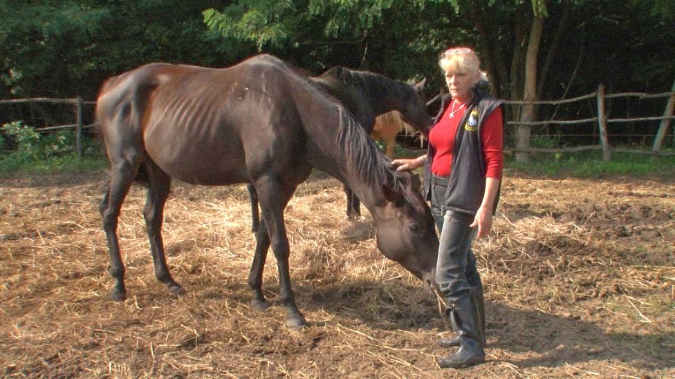 Ha megdöglik a ló, etessék meg a kutyákkal