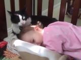 A macskák és kutyák imádják a babákat