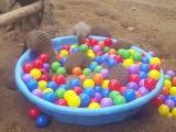Cuki mongúzok és egy tál labda