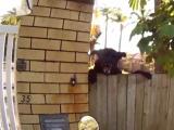 Egy ausztrál postás kalandjai