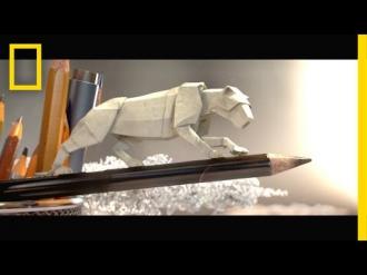 Papírból hajtogatott természetfilm a WWF-től