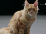 A macska (The Secret Life of Cats)