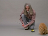 CATTERBOX™ - The world's first talking cat...