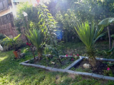 A kertem . The my tropical garden